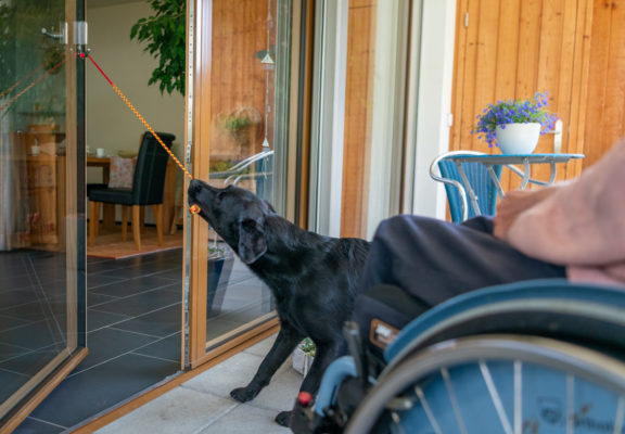 Assistance dog closes a door by pulling a strap fastened to the handle