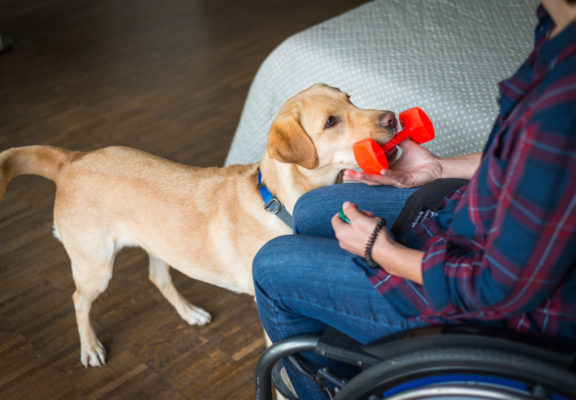 Assistance dog learns to bring an object to the wheelchair user by listening to a clicker