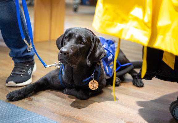 Autism service dog lies on the floor in a shop