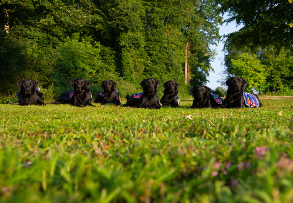 Autism service dogs striking a pose on the grass